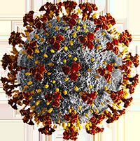 Foto des Coronavirus
